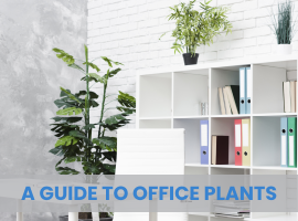 A Guide to Office Plants